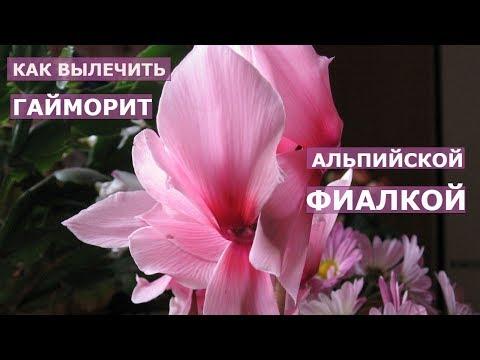 Видео о препарате Синус-лифт актив спрей-гель 10мл флакон