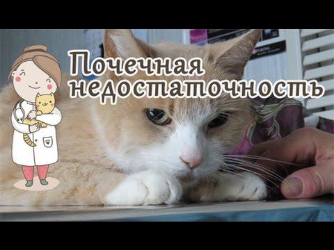 Видео о препарате Ипакитине для кошек и собак