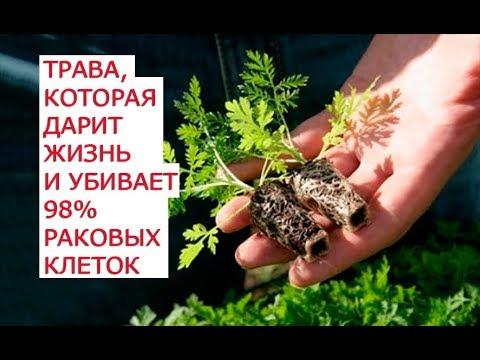 Видео о препарате Артемизинин (Artemisinin) 100мг капс. №90